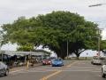 Banyantræ, Hilo, Big Island