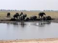 badende elefanter ved chobe-floden