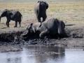 badende elefanter13 ved chobe-floden