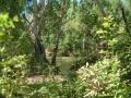 Bushwalk, Kakadu