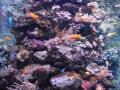 Sidney akvarium