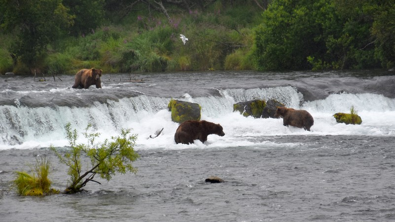 Brooks Falls, Katmai