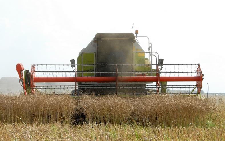 Kornhøst i Paderup, august 2009