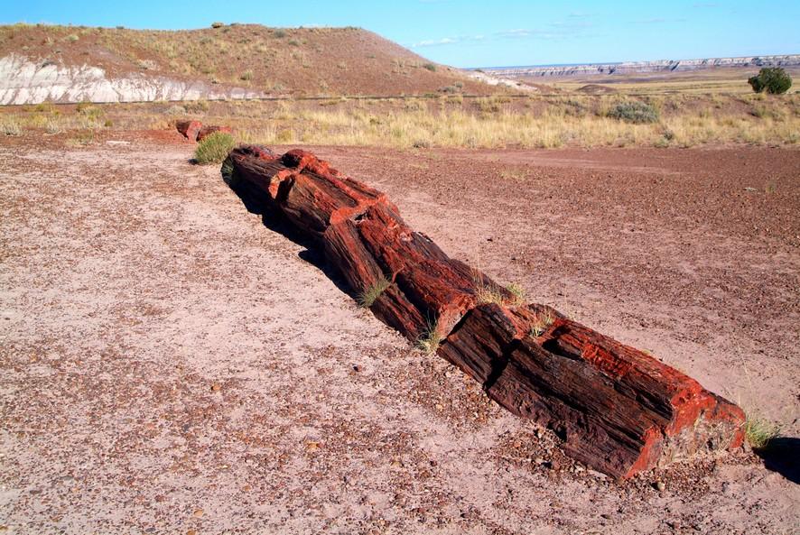 Den forstenede skov, Arizona