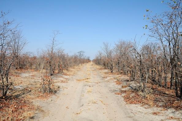 On the road, Savuti
