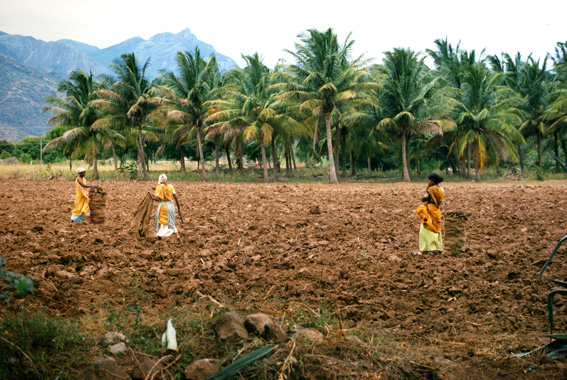 Rismarker, Kerala