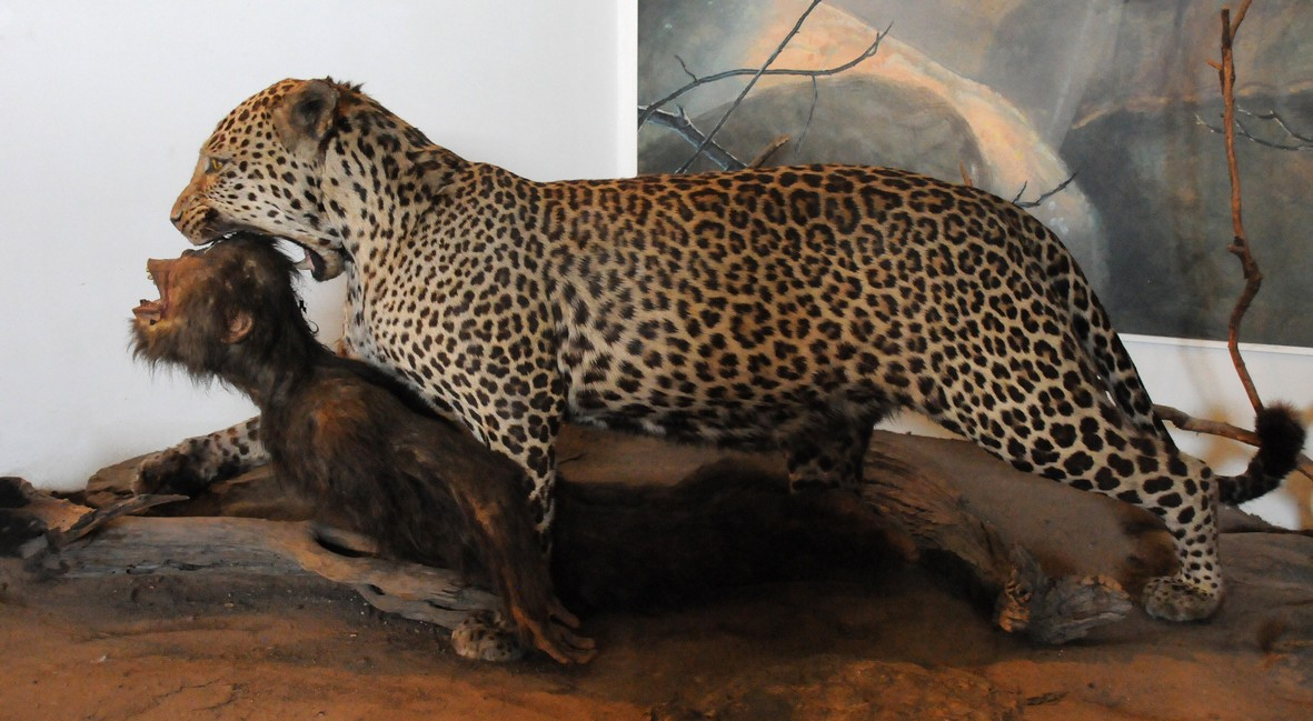 Transvaal museum, pretoria