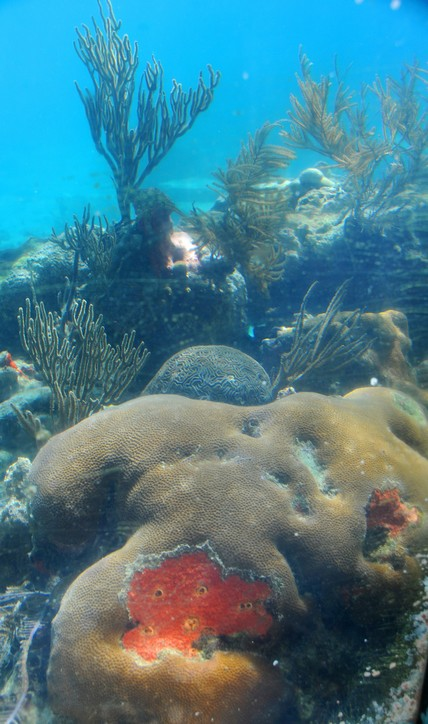 Coral World, Coki Beach