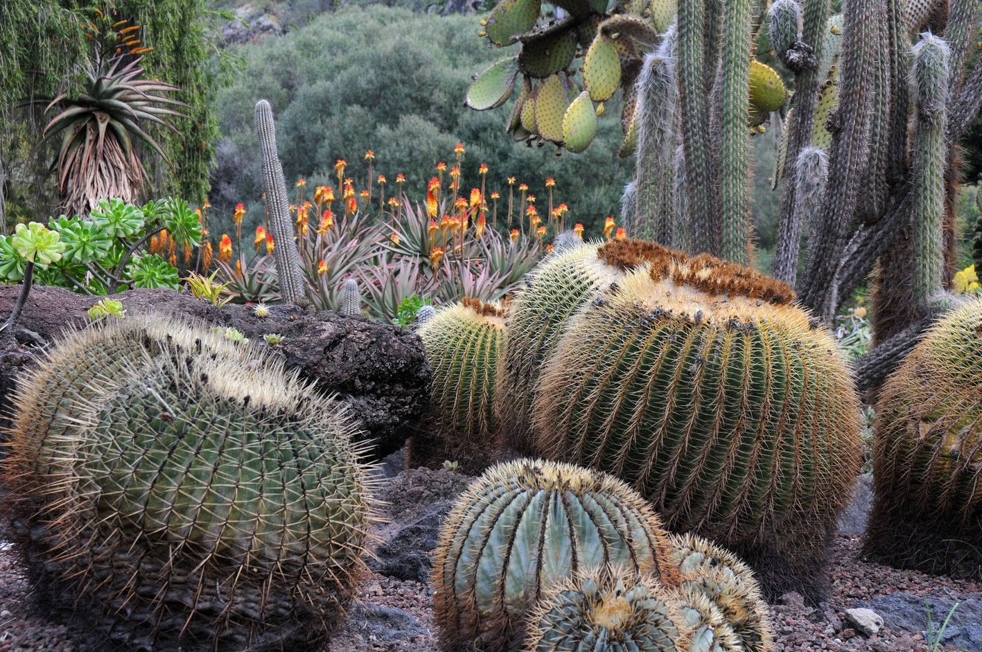 kaktus7, botanisk have