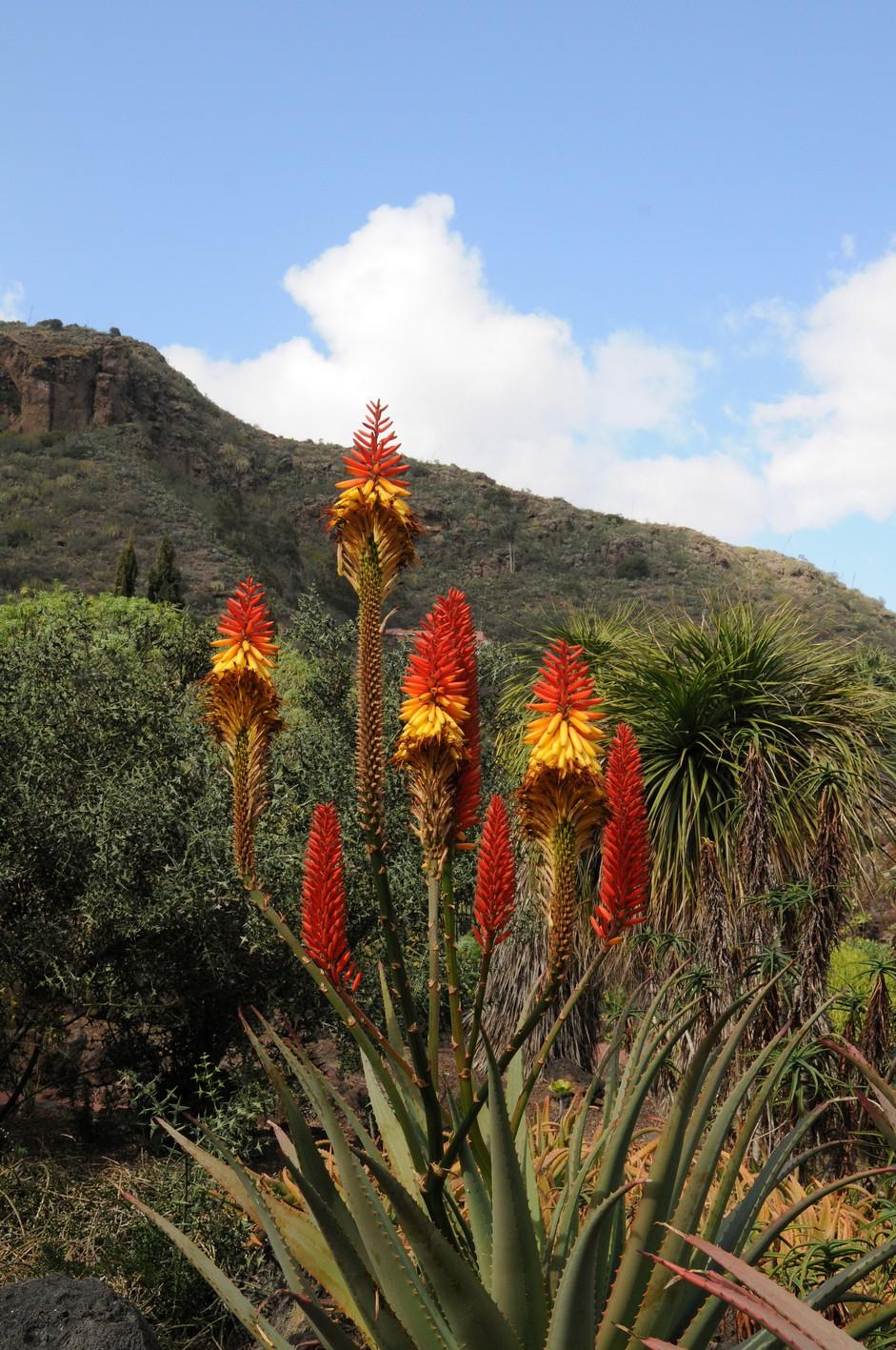 kaktusblomst4, botanisk have