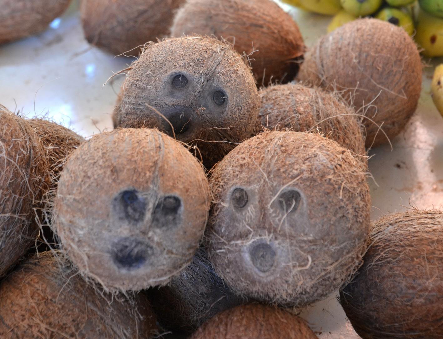 kokosnødder, victoria