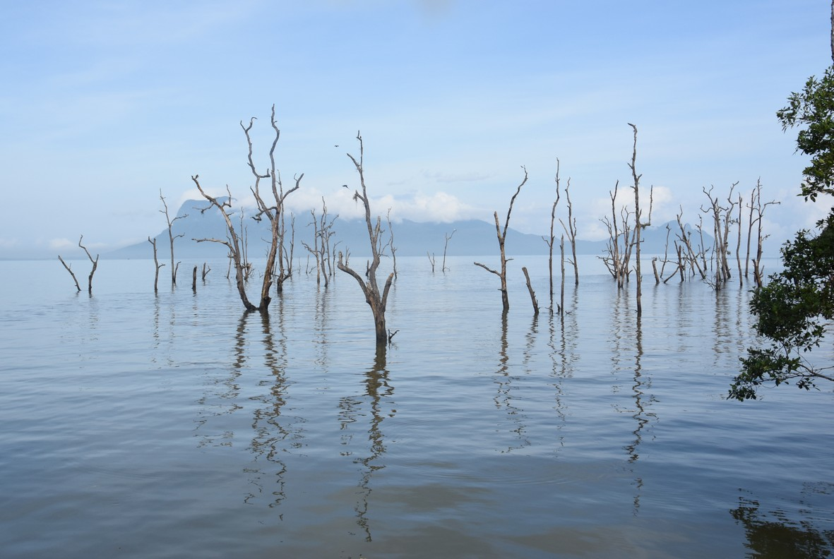 MANGROVE, BAKO NATIONALPARK